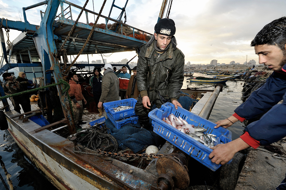 Fishers unload their catch after a night of fishing off Gaza's coastline. Under the 1993 Oslo Peace Accords, the people of Gaza were allowed to fish out to 20 nautical miles from their coastline, yet since the Israeli military imposed a naval blockade in 2007 they have been limited to just three nautical miles. In practice, fishers who venture beyond two nautical miles are shot at by Israeli gunboats; several have been injured and some killed. Despite having 40 kilometers of coastline and a long tradition as fishers, many fishers are unemployed and the people of Gaza are forced to import fish from Israel. And what fishing they can do close to shore mostly involves the harvest of immature fish, which biologists warn has a negative impact on fish stocks in the region....