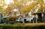 House with autumn birch tree in front yard.  St Paul Minnesota USA