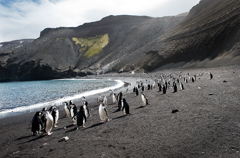 Adele Penguins, Antarctica