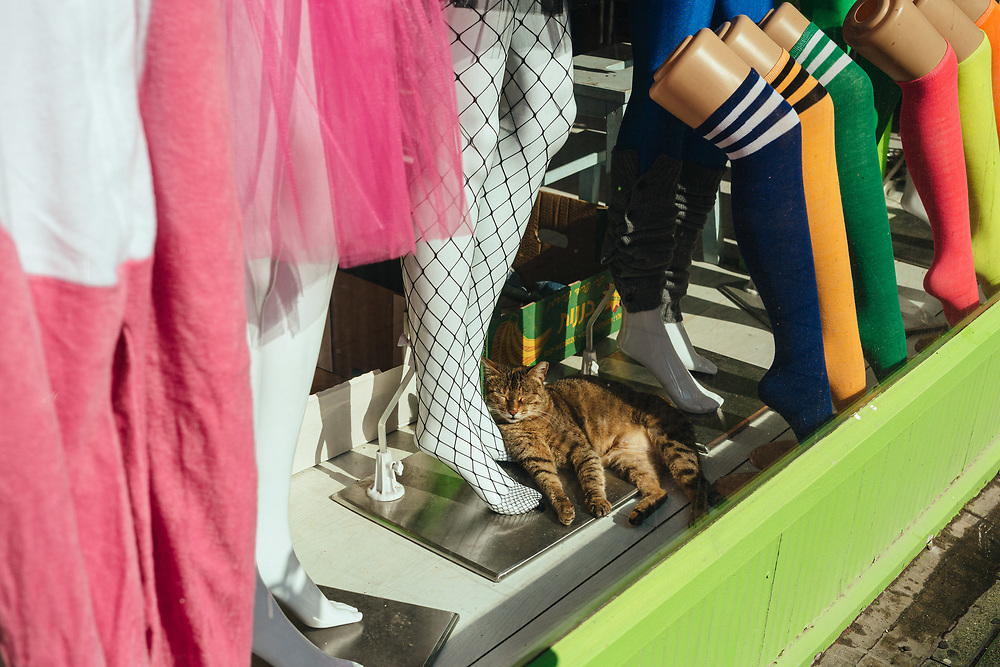 A cat rests next to colorful stockings for women at a store in Tel Aviv, Israel, on February 20, 2020.