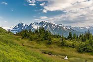 Alpine meadow overlooking Spencer and Deadman Glaciers in Chugach National Forest in Southcentral Alaska. Summer. Evening.