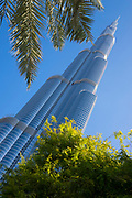 Low angle view of the famous Burj Khalifa, the tallest building in the world, as of 2021 in Dubai, United Arab Emirates with trees and shrubs in the foreground