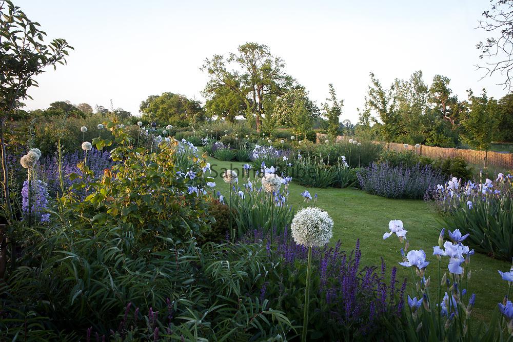 Rose Walk with Iris 'Jane Phillips', and Allium 'Mount Everest', Manor Farm, Cheshire