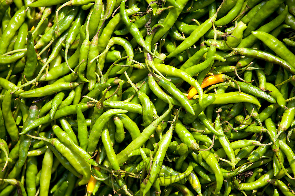 Old Delhi, Daryagang fruit and vegetable market  with green chillies on sale, India
