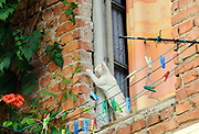 A cat plays in an open window in an old building. Tirana, Albania. 02Sep15