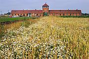 Birkenau Death Camp, Poland, summer wheat and flowers.