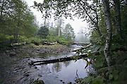 Temperate Rainforest, British Columbia - Canada