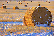 Straw bales dot the landscape under a November snow in western Montana.