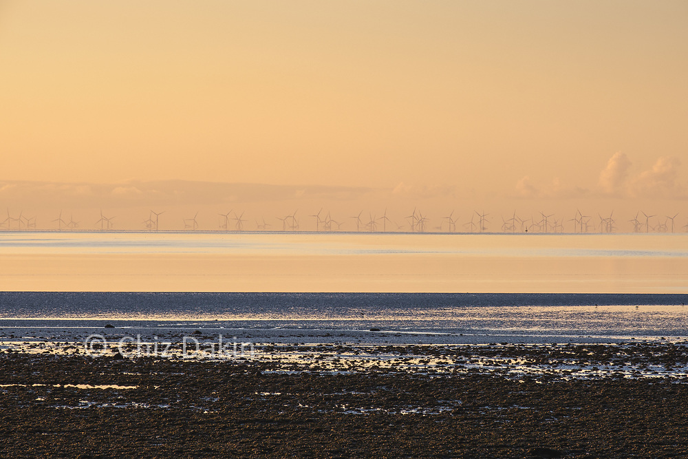 Off-shore windfarm generating green electricity near Cockerham Sands, Lancs (golden light of sunset)