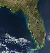 In this satellite image, bloom of the toxic   alga Karenia brevis is visible along the west   coast of Florida. (credit: Jacques Descloitres, NASA)