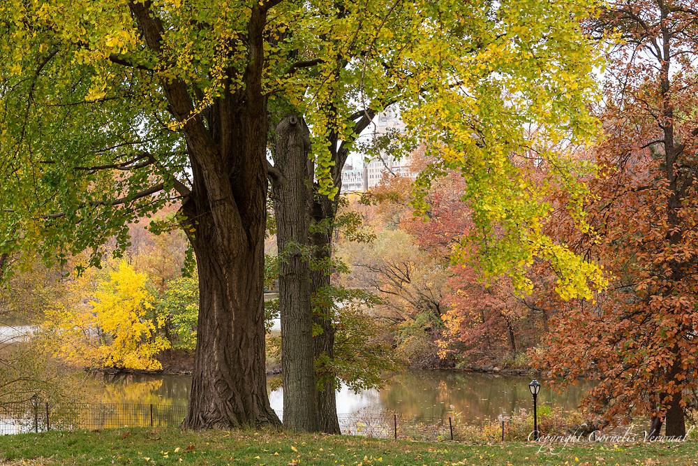 Central Park, Nov. 11, 2020.