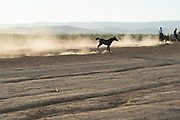 Free roaming horses in the Negev Desert, Israel