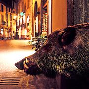 Wild Boar (taxidermy) in an alley in Orvieto, Italy.