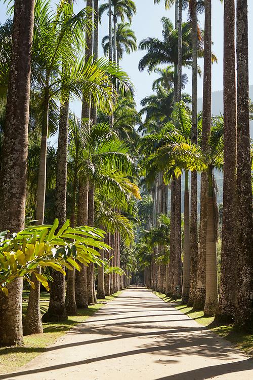 Avenue of the Imperial Palms, Jardim Botânico, Rio de Janeiro