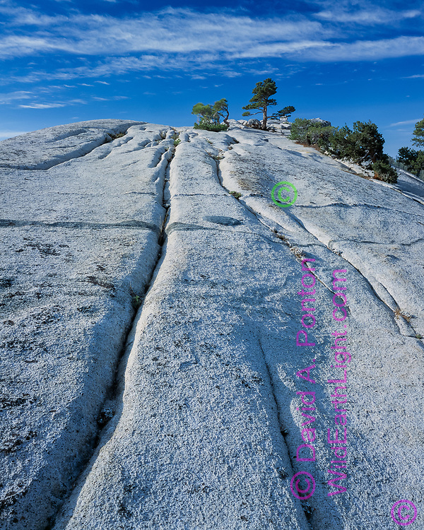 Seams in a granite slope in the high country of Yosemite National Park lead way up to bonsai trees and a beautiful sky, © David A. Ponton