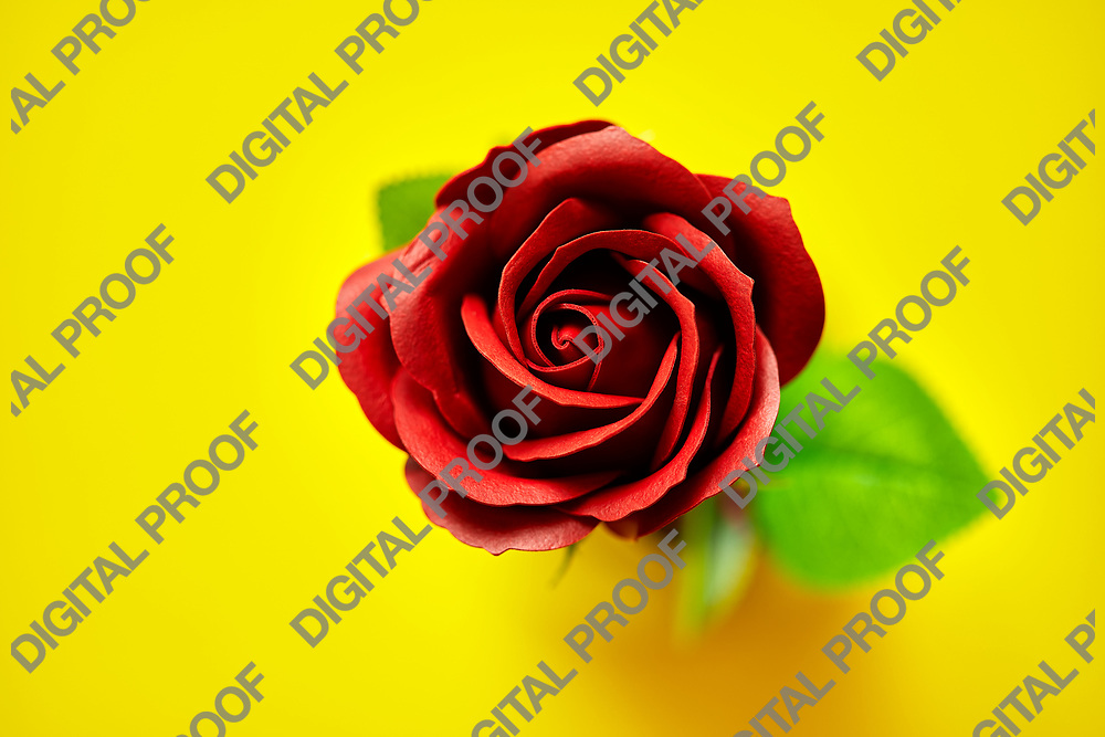Minimalistic of an artificial red rose image photographed in studio isolated on yellow background