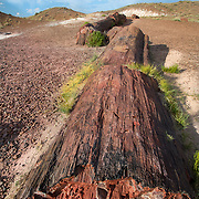 Petrified Forest National Park is a United States national park in Navajo and Apache counties in northeastern Arizona.