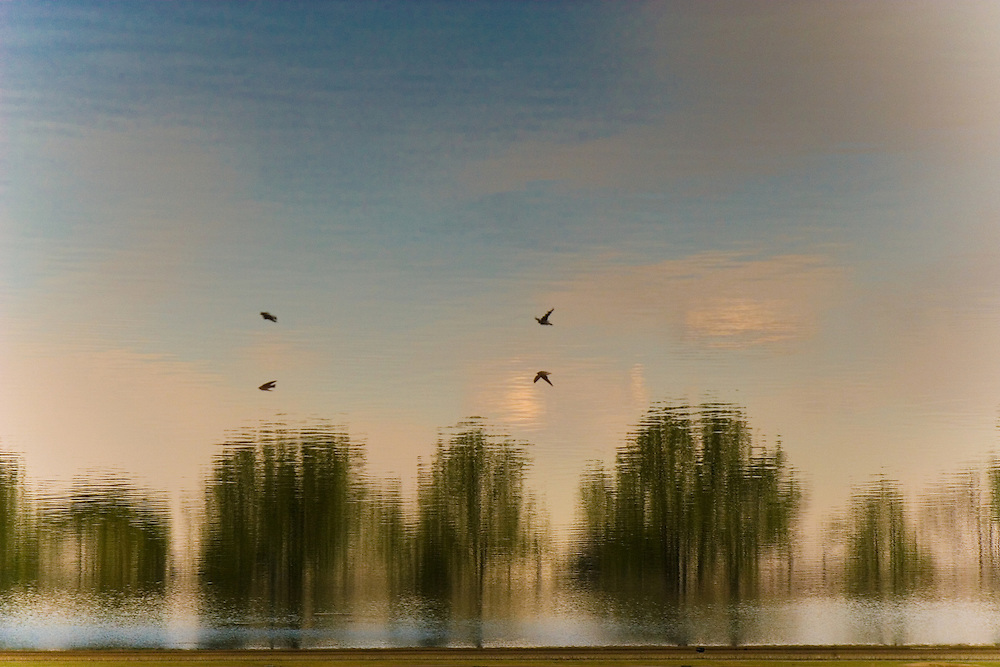 Trees, a sky with puffy white clouds, and two birds are reflected in a calm body of water.