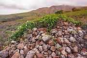 Chumash burial site above Smugglers Cove, Santa Cruz island, Channel Islands National Park, California USA