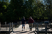 GREEN BAY, WISCONSIN - MAY 29, 2020: Parks, Recreation and Forestry Director for the City of Green Bay Dan Ditscheit, left, and Bay Beach Wildlife Sanctuary Superintendent Steve Lakatos walk along the floating boardwalk at the Wildlife Sanctuary in Green Bay, Wisconsin on Friday, May 29, 2020. CREDIT: Ben Brewer for the New York Times