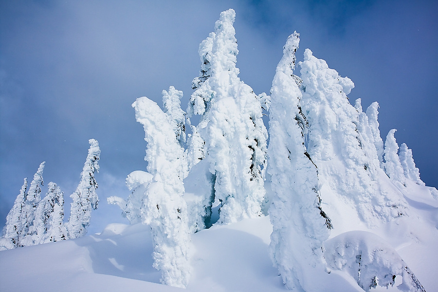 Trees covered in hoar frost in the Mount Baker backcountry, near Artist Point, Mount Baker-Snoqualmie National Forest, Washington.