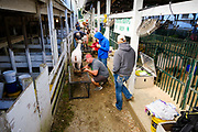 16 JULY 2020 - BOONE, IOWA: People groom sheep on the first day of the Boone County Fair in Boone. Summer is county fair season in Iowa. Most of Iowa's 99 counties host their county fairs before the Iowa State Fair. In 2020, because of the COVID-19 (Coronavirus) pandemic, many county fairs were cancelled, and most of the other county fairs were scaled back to concentrate on 4H livestock judging. Boone county scaled back its fair this year. The Iowa State Fair was cancelled completely. Boone County Emergency Management did not approve going ahead with the fair, and has advised anyone who goes to the fair to take precautions and monitor themselves for symptoms of the Coronavirus.             PHOTO BY JACK KURTZ