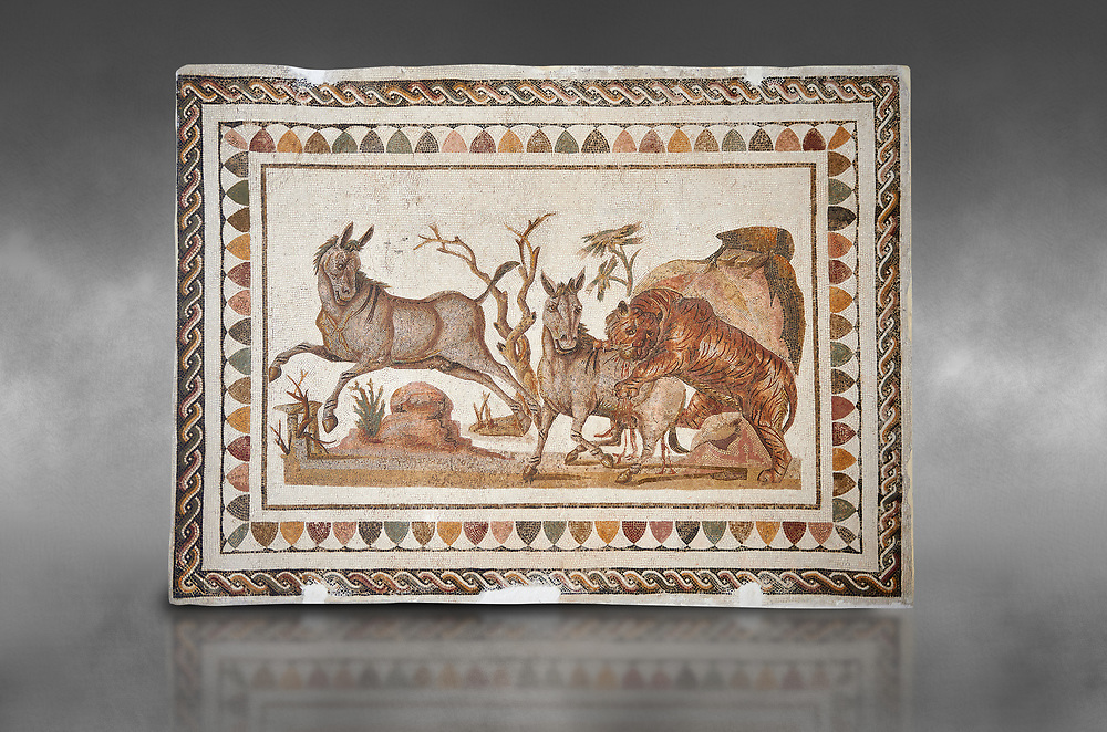 Picture of a Roman mosaics design depicting a lion attacking two onagers or Asiatic wild ass, from the ancient Roman city of Thysdrus. 3rd century AD. El Djem Archaeological Museum, El Djem, Tunisia. Against a grey background .<br /> <br /> If you prefer to buy from our ALAMY PHOTO LIBRARY  Collection visit : https://www.alamy.com/portfolio/paul-williams-funkystock/roman-mosaic.html  . Type -   El Djem   - into the LOWER SEARCH WITHIN GALLERY box. Refine search by adding background colour, place, museum etc<br /> <br /> Visit our ROMAN MOSAIC PHOTO COLLECTIONS for more photos to download  as wall art prints https://funkystock.photoshelter.com/gallery-collection/Roman-Mosaics-Art-Pictures-Images/C0000LcfNel7FpLI