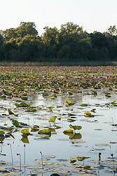 Greer Island in Lake Worth, Fort Worth Nature Center, Fort Worth, Texas USA. Greer Island is the home of the famed Lake Worth Monster, or Goatman.