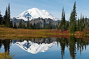 Mount Rainier reflects in one of the Tipsoo Lakes, adjacent to the highway at Chinook Pass in Mount Rainier National Park, on the Naches Peak Loop Trail. Published since 2013 on StayRainier.com and AltaCrystalResort.com web sites. Global warming and climate change: Mount Rainier's glaciers shrank 22% by area and 25% by volume between 1913 and 1994 in conjunction with rising temperatures (Nylen 2004). As of 2009, monitored glaciers are continuing to retreat (NPS). Over the last century, most glaciers have been shrinking across western North America (Moore et al. 2009) and the globe (Lemke et al. 2007) in association with increasing temperatures.
