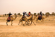 Israel, Negev, Beduin Camel racing in the desert
