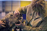 Birmingham, England, 10/03/2006..Judging Irish Wolfhounds as over 22,000 dogs and their owners take part in Crufts Dog Show, the largest event of its kind in the world.