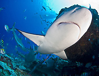 Yap in Micronesia has an amazing array of marine life and beautiful culture.