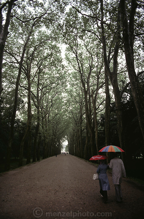 A man and a woman carrying brightly colored umbrellas walk down a tree-lined path. Chenonceaux, France.