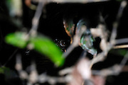 Ecuador, May 13 2010: A Caiman eye visible in a river in the Cuyebeno Reserve. Copyright 2010 Peter Horrell