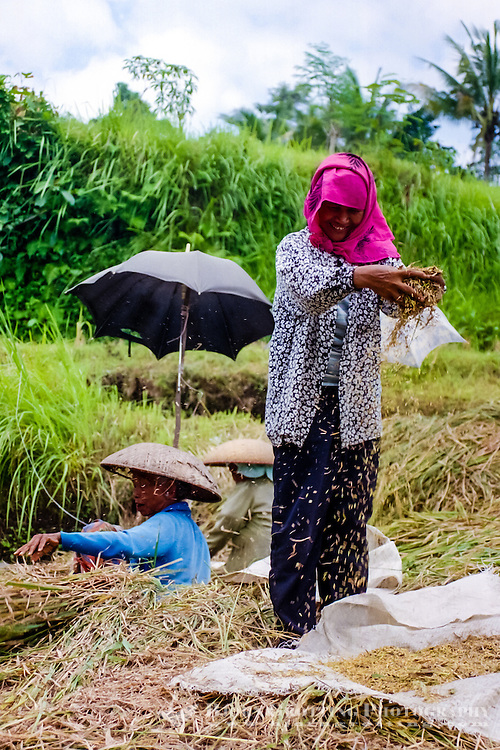 Bali, Gianyar, Bedulu. Cleaning and packing of the rice before it is sent to the factory for further processing.