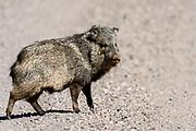 San Bernardino National Wildlife Reserve photographs Arizona, USA