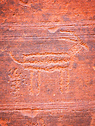Petrograph carved into the walls in Buckskin Gulch canyons, Utah, United States of America