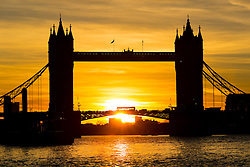 © Licensed to London News Pictures. 25/01/2016. London, UK. Colourful sky behind Tower Bridge during sunrise and mild weather this morning.  Photo credit : Vickie Flores/LNP