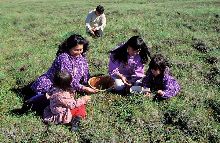 Two Iñupiaq women in traditional kuspuks, pick blueberries with children, Kotzebue, Alaska