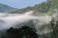 Rainforest morning in Sudián, Tongbiguan nature reserve, Dehong prefecture, Yunnan province, China