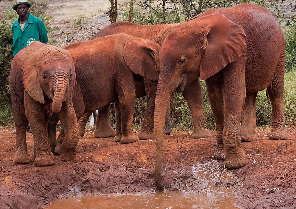 Kenya Elephant Rescue Center Gallery