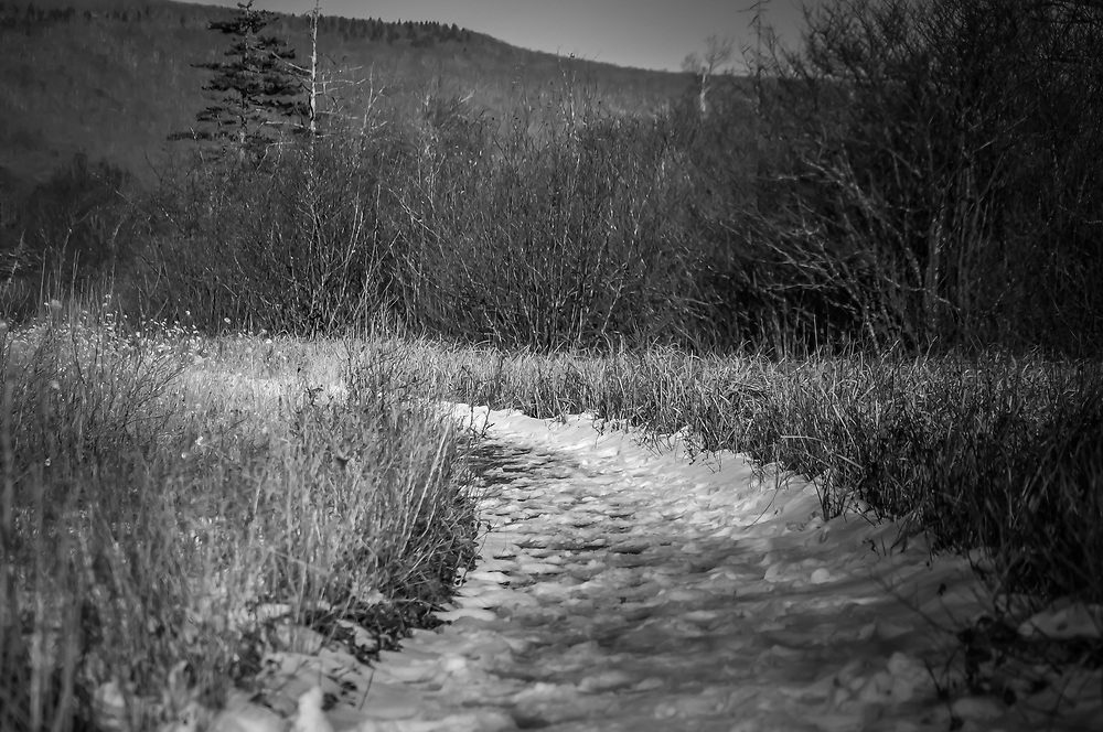 A light snow covers the bogs boardwalk, of Cranberry Glades high in the Allegheny Mountains at about 3,400 feet.
