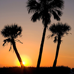 Palm trees at sunset on North Beach at Fort De Soto Park in Pinellas County, Florida.