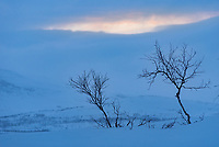 It snowed almost the whole time while I was in Finland, and there was only a hint of color as the sun set. I captured it from a small island on Lake Kilpisjärvi, where there were a few trees growing. The mountain in the background is in Sweden.