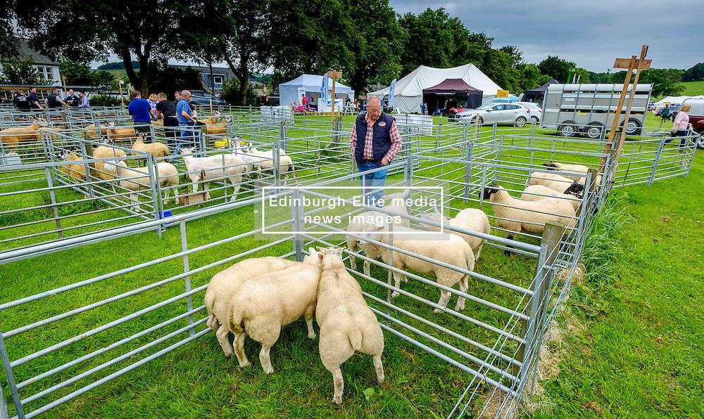 Biggar, South Lanarkshire, Scotland 23 July 2016<br /> <br /> Penned Texel sheep waiting to be shown.<br /> (c) Andrew Wilson   Edinburgh Elite media