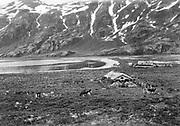 9707-K240.  Barabora and cattle in yard. Unalaska June 22-24, 1917 Alaska