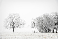 Snow covered field with trees in the distance.