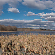 Great Meadows Wildlife Sanctuary in Concord, MA is home for birds, duck, turtles, beaver and muskrat.