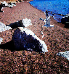 Seagull Flight on a beach in Grand Marais Minnesota