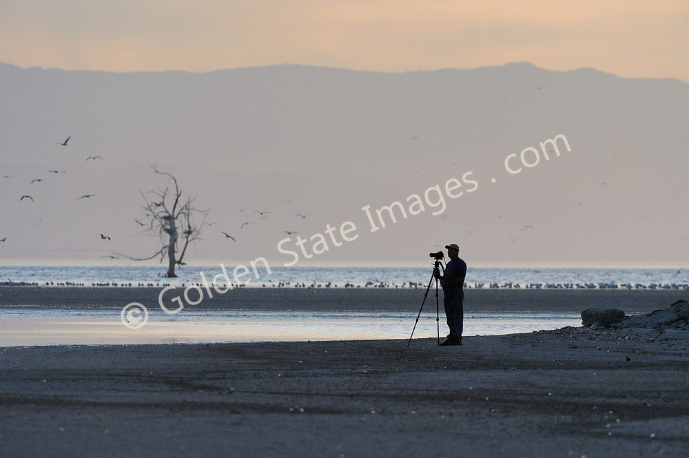 A photographer takes in the view at sunset.<br /> <br /> The Salton Sea has been in decline for years. Large scale fish die offs have become annual summer events since the late nineties. <br /> <br /> The major causes are believed to be the ever increasing salinity pollution from Mexico via the New River and agricultural runoff from the surrounding farmland on the southern end of the Sea. <br /> <br /> The pollutants include huge quantities of raw sewage industrial waste farm fertilizers and pesticides.